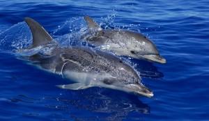 Delfinsafari