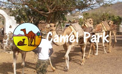 Camel Park Teneriffa